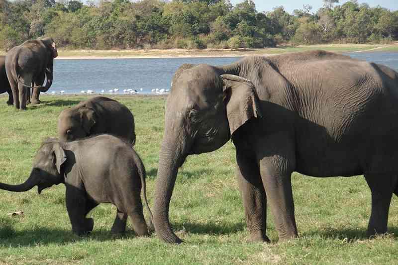 Diferentes incidentes com elefantes já foram registrados por causa do turismo selvagem (Foto: Max Pixel)