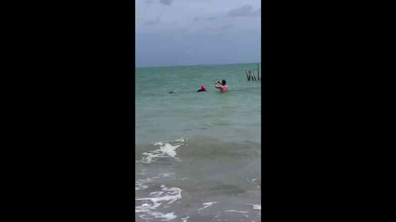 Homem é flagrado montando em peixe-boi em Maceió — Foto: Reprodução