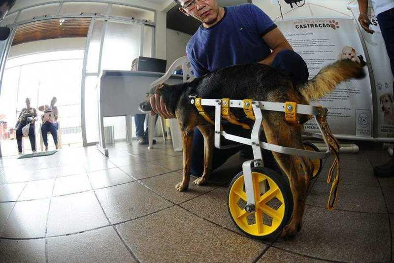Arquiteto fabrica cadeiras de rodas para animais especiais em ONG de Manaus
