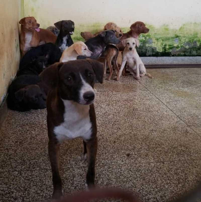 Foram resgatados 22 cães, vítimas de maus-tratos, em uma casa no bairro Beirol, em Macapá — Foto: Batalhão Ambiental/Divulgação