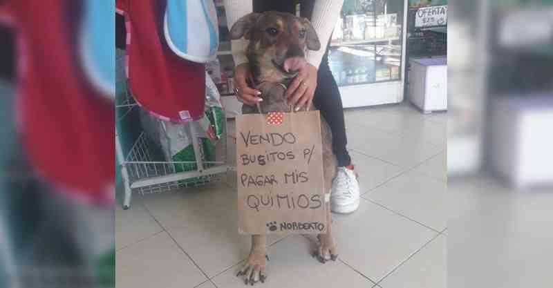 Cachorrinho com câncer 'vende' roupinhas para pagar sua quimioterapia
