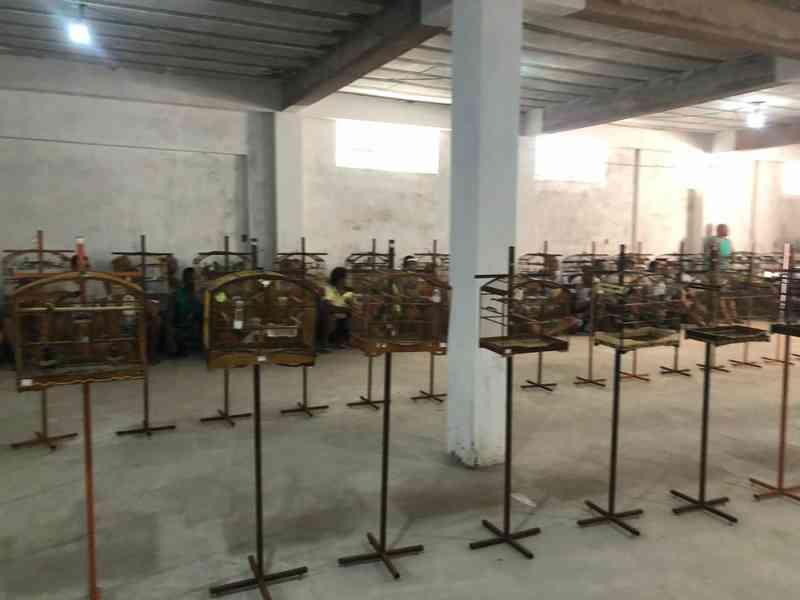 Torneio irregular de canto de aves termina com 90 pássaros apreendidos e 21 pessoas detidas em Salvador, BA