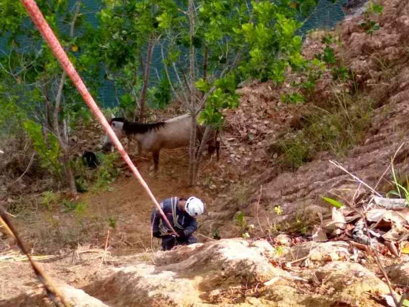 Égua de 450 quilos fica presa em pedreira desativada na Bahia após cair de altura de 28 metros.