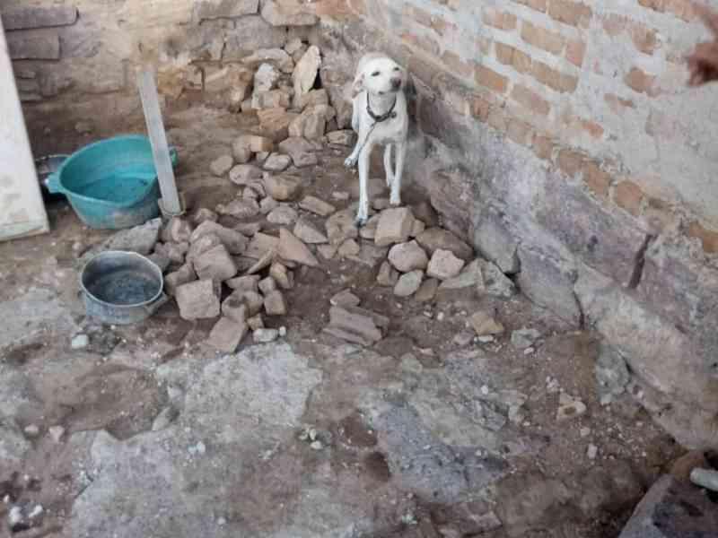 Após denúncia, Polícia Militar e Civil de Ruy Barbosa (BA) libertam cadela que sofria maus-tratos e doam