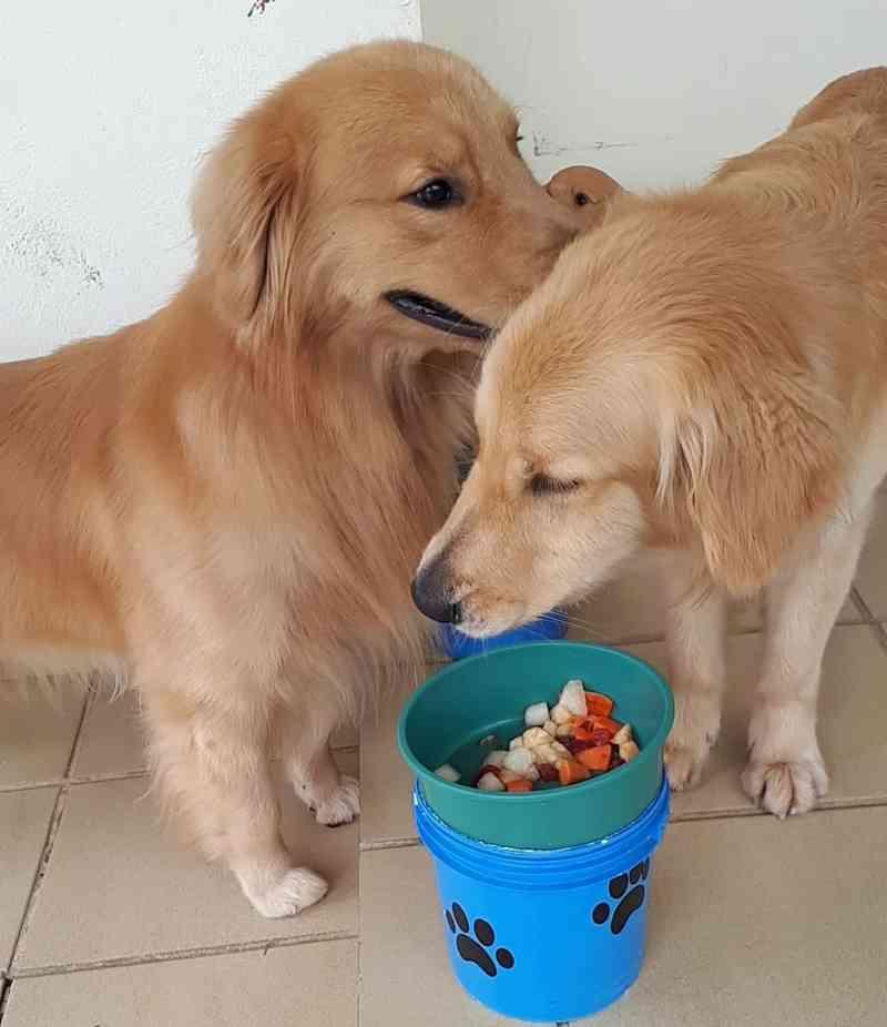 Doença é causada por um vírus e atinge os cachorros — Foto: Arquivo pessoal/Ângela Batista