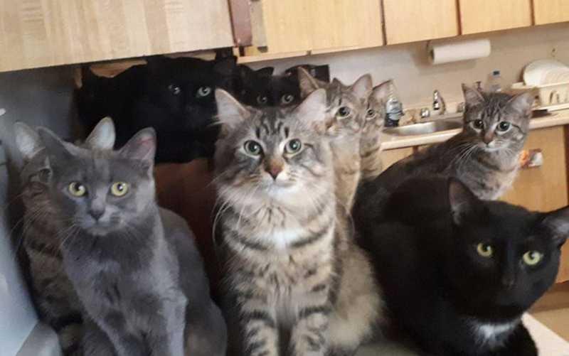ONG de gatos resgata mais de 100 felinos em casa no Canadá