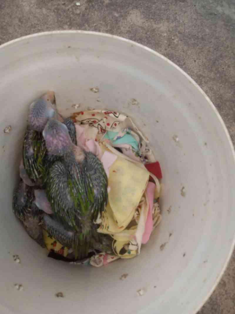 Vinte e sete pássaros silvestres são apreendidos em feira de Fortaleza, CE