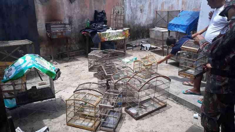 Animais estavam em cativeiro e foram recolhidos pelos agentes ambientais — Foto: Divulgação PMCE