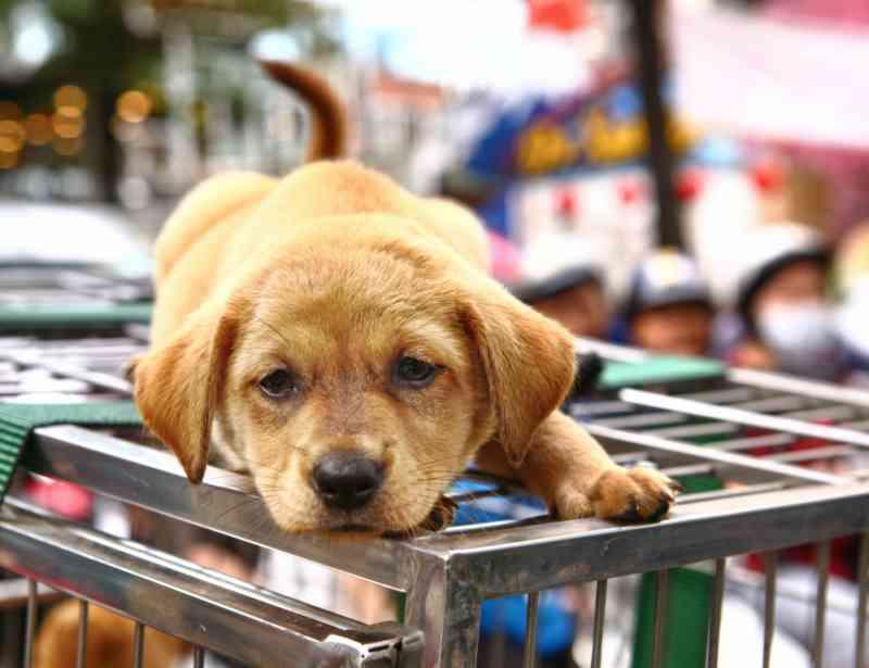 China dá um passo importante na luta contra a carne de cachorro