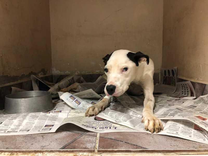 Cachorra é resgatada e tratada em clínica veterinária — Foto: Fabiano Andrade / TV Globo