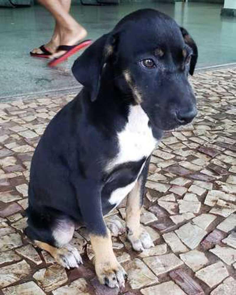 A cadela ganhou o nome de 'Veruska' e está internada. Ela está para adoção (foto: Arquivo Pessoal )