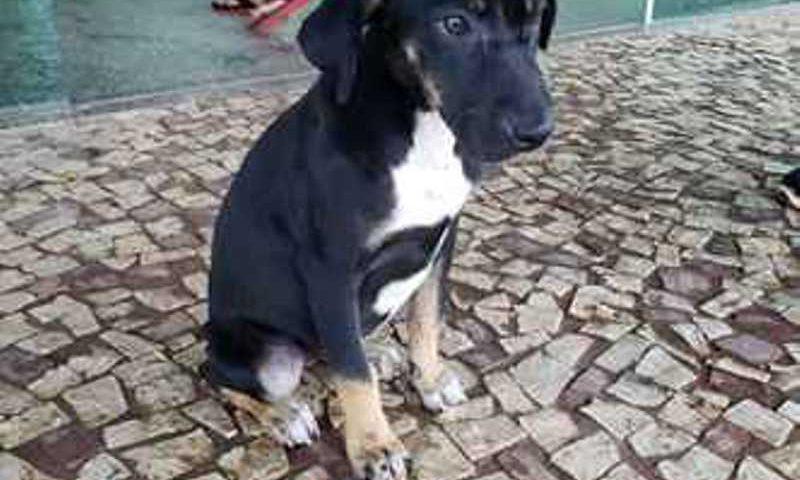 A cadela foi abusada sexualmente pelo morador de rua (foto: PCDF/Divulgação)