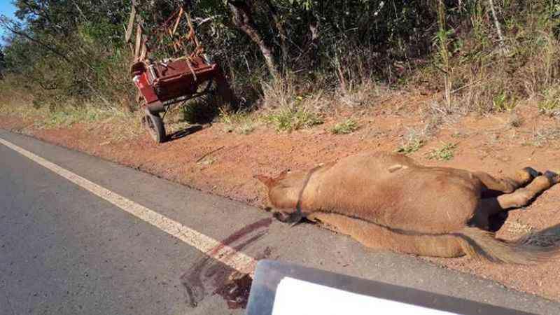 Cavalo morto após ser atropelado: tutores dos bichos também têm culpa (foto: PMDF/Divulgação)