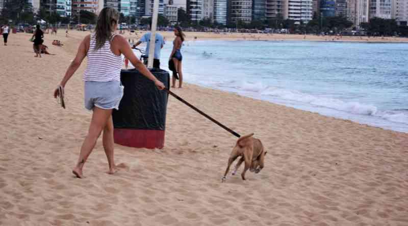 Deputado quer regulamentar presença de animais domésticos em praias brasileiras