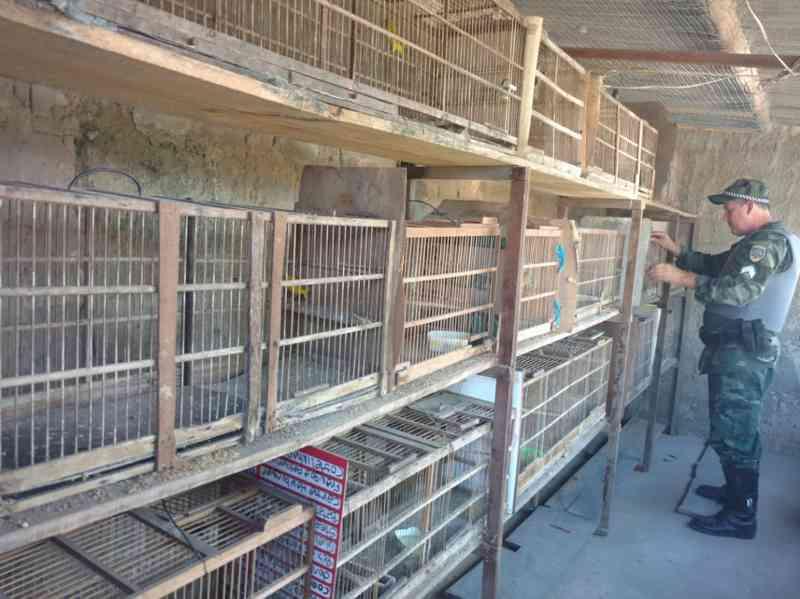 Pássaros silvestres mantidos em cativeiro são apreendidos em Mucurici, ES