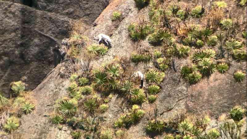 Cães são abandonados na Pedra do Penedo e resgate mobiliza bombeiros na Baía de Vitória, ES