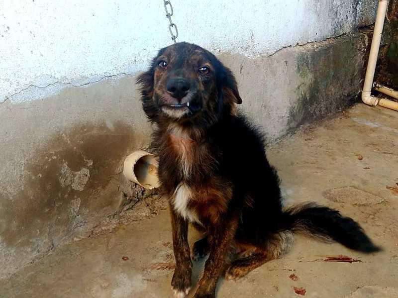 Maus-tratos a animal no Bairro Santo Antônio, em Colatina, ES. Polícia age com rigor