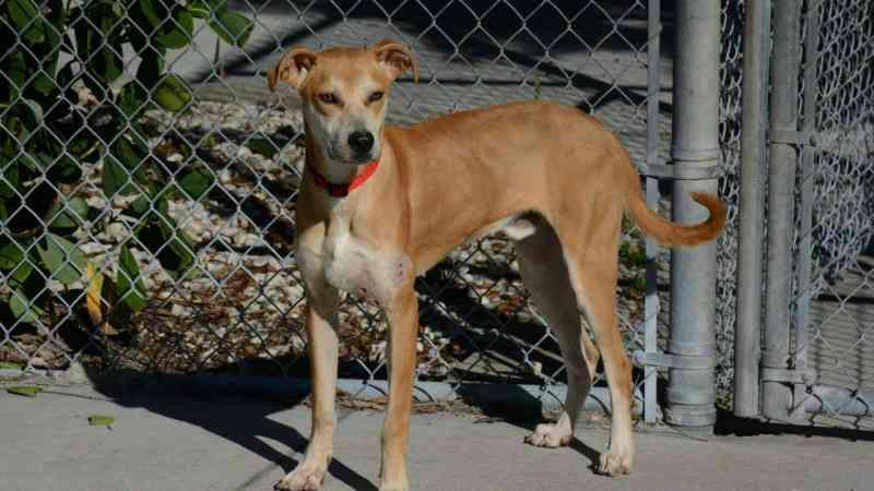 Polícia da Florida adota cão encontrado com a boca tapada com fita adesiva. Facebook: Lee County Sheriff's Office