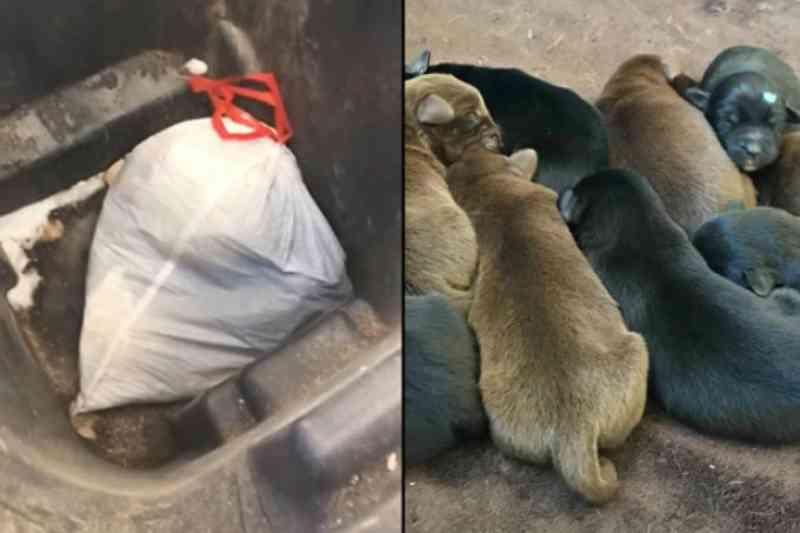 Homem joga oito filhotes de cachorro no lixo