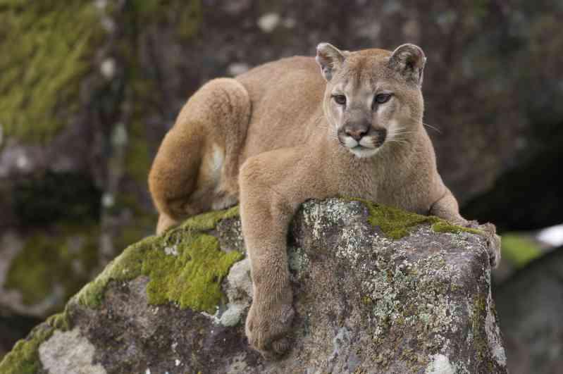 Mulher mata leão da montanha para tirar item da sua 'lista de desejos' e publica fotos de comemoração