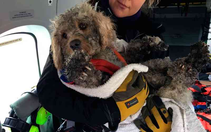 Cão perdido em montanha coberta de neve é resgatado com ajuda de helicóptero; vídeo