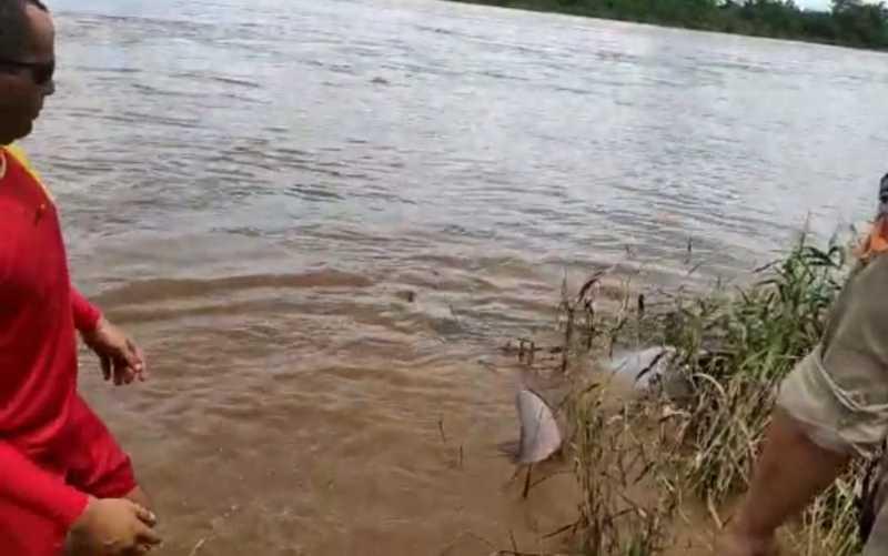 Boto é salvo por bombeiros no Rio Araguaia após ficar preso em linha de pesca