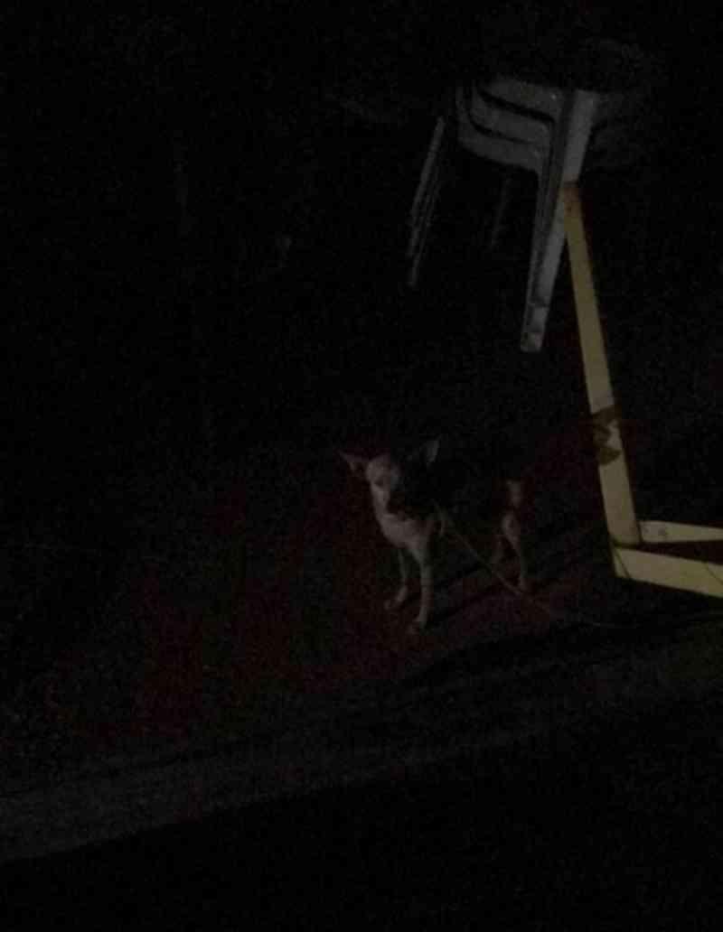 ONG resgata animal vítima de maus-tratos, em Quirinópolis, GO