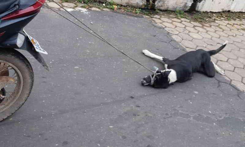 Imagens mostra motociclista arrastando cachorro no Maranhão