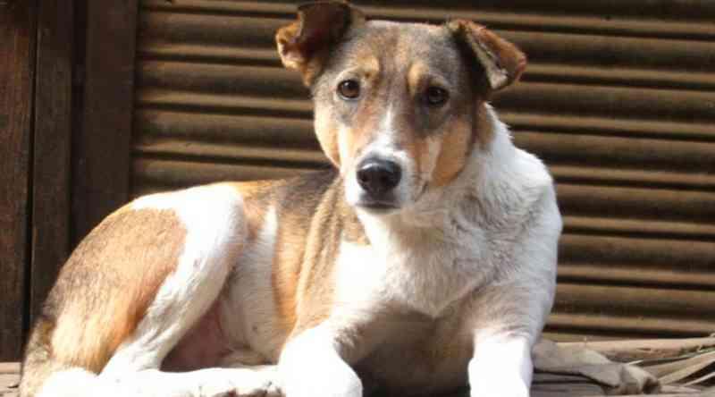 Cadastro para a castração de cães e gatos tem mais de 550 registros em Uberaba, MG