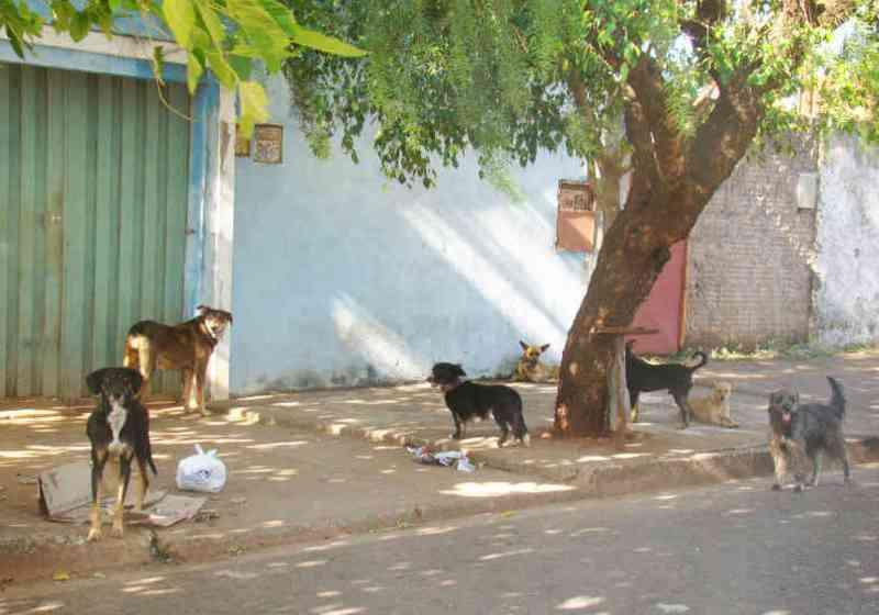 Programa de castração de cães e gatos em Uberaba (MG) já supera 580 cadastros
