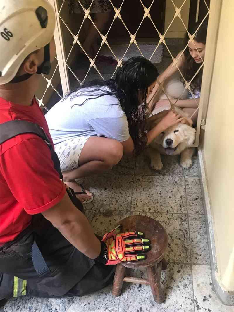 Bombeiros atendem ocorrência de salvamento de animal. — Foto: Divulgação/Corpo de Bombeiros de MG