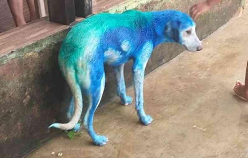 Foi dado banho no animal, mas a coloração continuou.