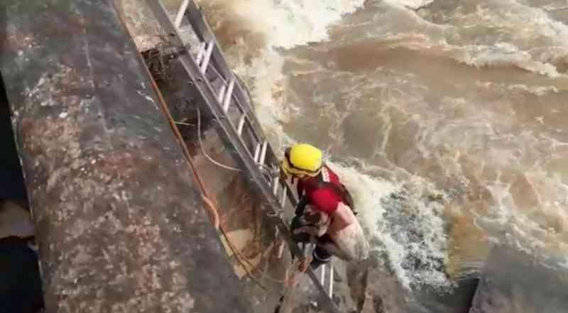 Animal foi resgatado após cair da ponte sobre o Rio Itapecerica no Bairro Niterói — Foto: Acervo Pessoal/Valquíria Souza