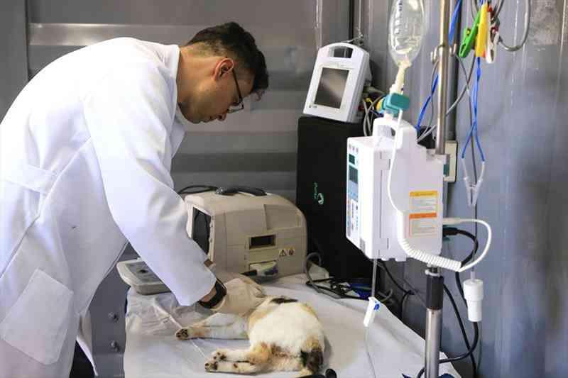Gato sendo preparado para castração em unidade móvel — Foto: Divulgação/Prefeitura