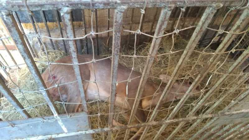 Animal foi encontrado ferido, possivelmente por ação de caçadores — Foto: Corpo de Bombeiros/Divulgação