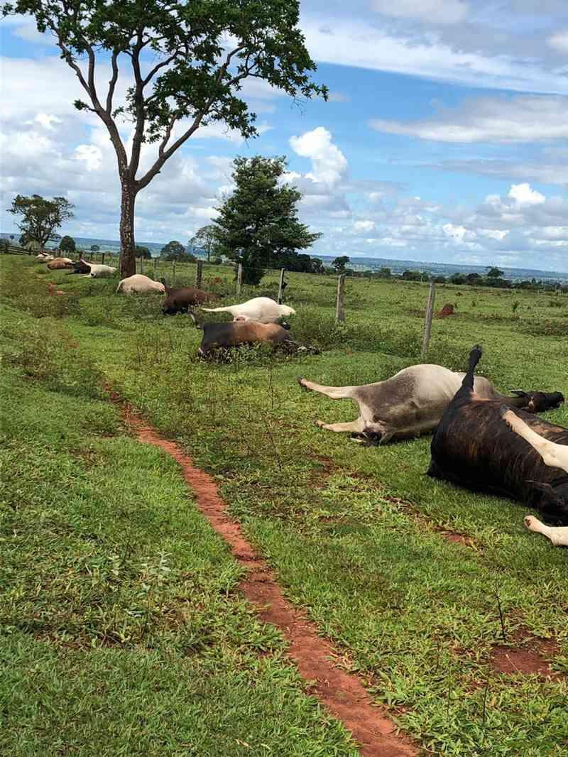 Animais morreram próximo a cerca de fazenda, em Aparecida do Taboado (MS). — Foto: Site Costa Leste News