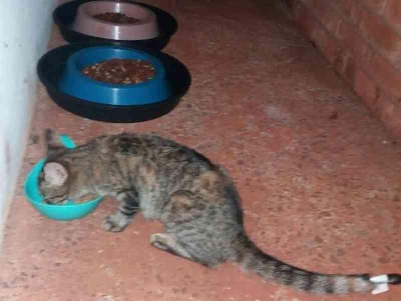 Gatinho sendo alimentado na UFMS (Foto: Direto das Ruas)