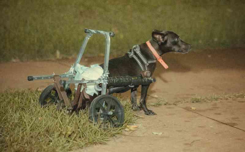 Neguinho passeando na nova cadeira de rodas — Foto: Lucas Odeque/Divulgação