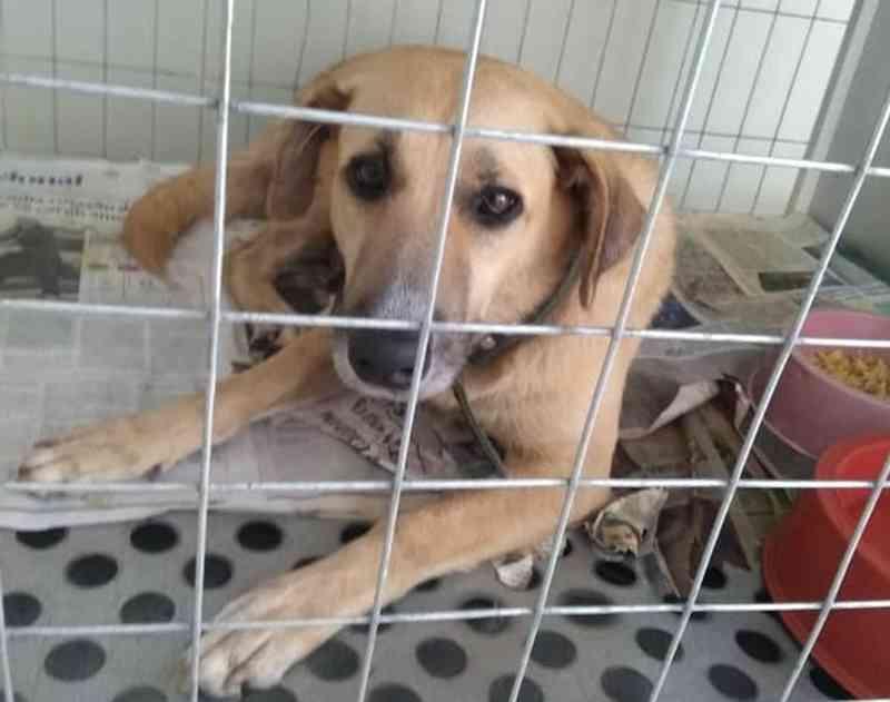 A cachorrinha Diana recupera-se da cirurgia e está pronta para ser levada ao novo lar. — Foto: Emiliana Souza/Reprodução