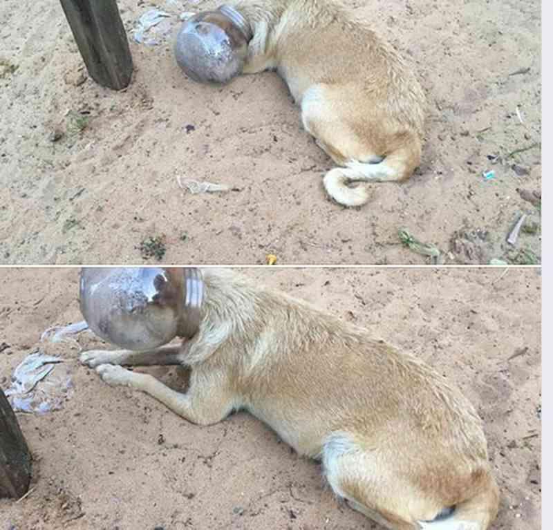 Post feito por ONG no Facebook mostra a situação em que a cadela foi encontrada — Foto: Facebook/Reprodução