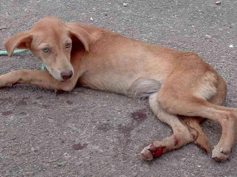 Cadelinha é uma fêmea e ganhou o nome Amora. — Foto: Divulgação/ Abrigo AuFamily
