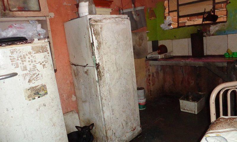 Animais viviam na casa do idoso em condições insalubres — Foto: Ascom/MPPA