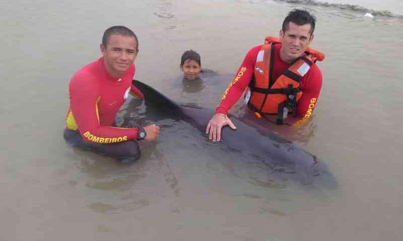 Baleia encalhada em praia de Salinópolis, nordeste do Pará, é levada de volta ao mar. — Foto: Corpo de Bombeiros / PA