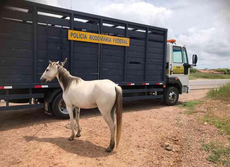 PRF recolhe animais em rodovias da Paraíba — Foto: PRF/Divulgação
