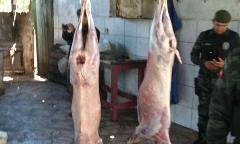 MPT investiga trabalho escravo e infantil e maus-tratos de animais em abatedouros da PB