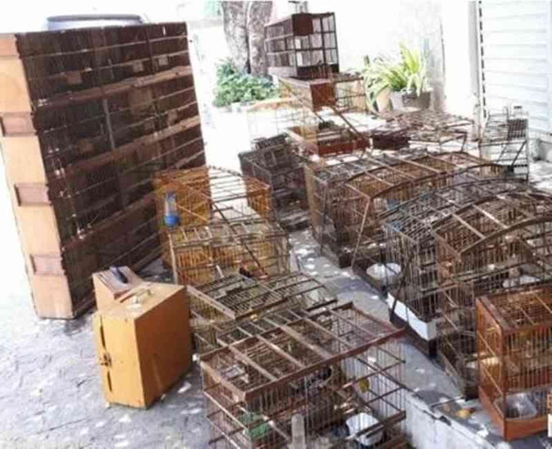 MPPE e CPRH resgatam mais de 100 aves e jabutis em Taquaritinga do Norte, PE