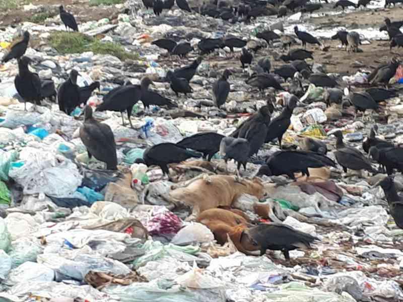 CCZ diz que vai apurar matança de 15 cães supostamente mortos a pauladas em Floriano, PI