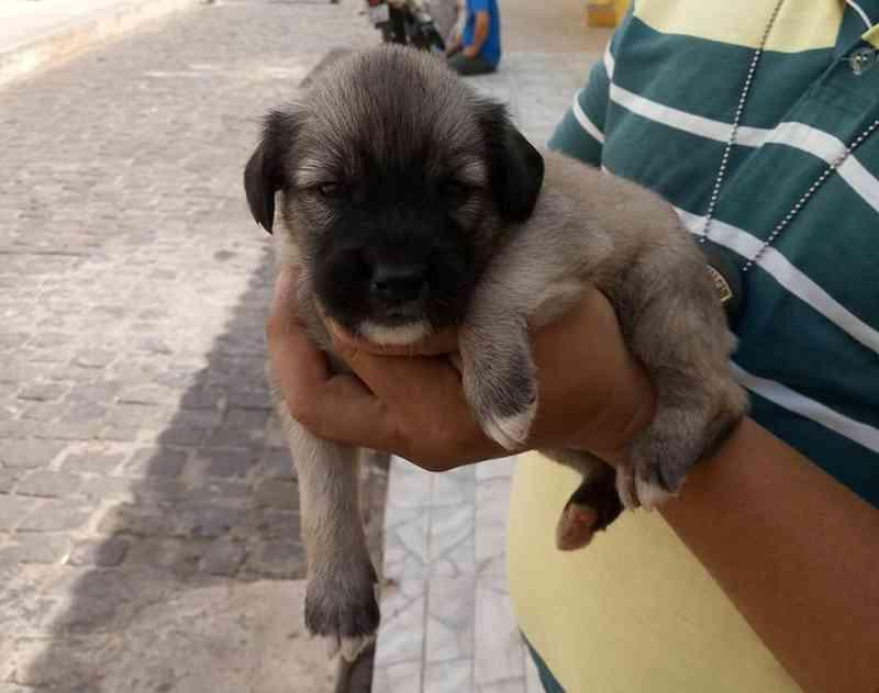 Filhote de cachorro é resgatado depois de ser esquecido dentro de carro e ganha nova família — Foto: Divulgação