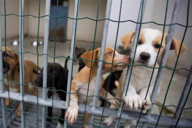 Portugal: Alandroal abre concurso público para construção do Centro de Recolha Animais de Companhia