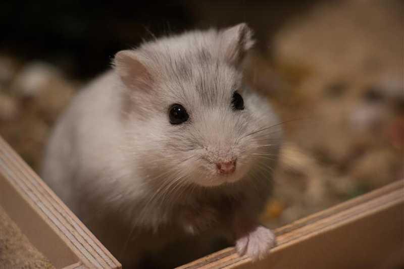 Homem foi condenado por esmagar hamster até à morte em Lisboa